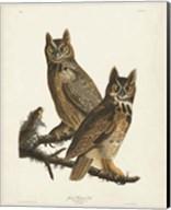 Pl 61 Great Horned Owl Fine-Art Print