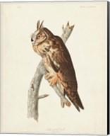 Pl 383 Long-eared Owl Fine-Art Print