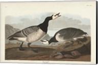 Pl 296 Barnacle Goose Fine-Art Print