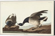 Pl 391 Brant Goose Fine-Art Print