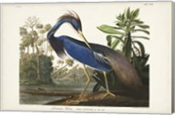 Pl 217 Louisiana Heron Fine-Art Print