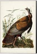 Pl 1 Wild Turkey Fine-Art Print
