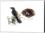 Bird & Nest Study I Fine-Art Print