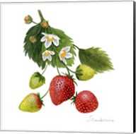 Strawberry Study I Fine-Art Print