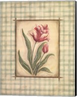 Gingham Tulip Fine-Art Print