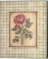 Gingham Peony Fine-Art Print