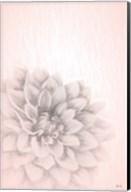 Blue Chrysanthemum Fine-Art Print