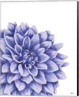 Blue Chrysanthemum II Fine-Art Print