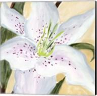 White Lily I Fine-Art Print