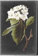 Dramatic White Flowers I Fine-Art Print