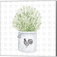 Farm Herbs II Fine-Art Print
