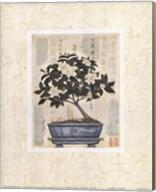 Gardenia Bonsai Fine-Art Print