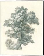 Tree Study I Fine-Art Print