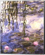 Waterlilies (pink flowers) Fine-Art Print