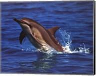 Dolphin - photo Fine-Art Print