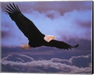 Bald Eagle In Flight Fine-Art Print