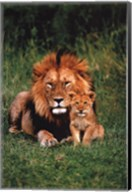 Lion And Baby Wall Poster