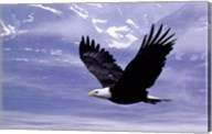 Eagle Wall Poster