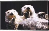Sea Otters Fine-Art Print