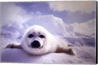 Seal Pup Fine-Art Print