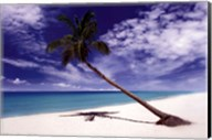 Tropical Leaning Palm Tree Fine-Art Print