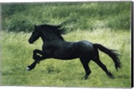 Black Horse Running Fine-Art Print
