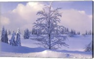 Winter Tree Wall Poster