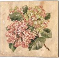 Hydrangea Fine-Art Print