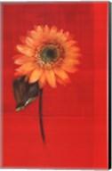 Flower on Red Fine-Art Print