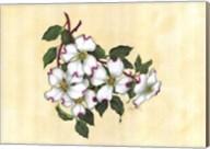 Spring Dogwood II Fine-Art Print