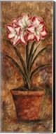 Rainbow Amaryllis Fine-Art Print