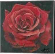 Rosa Roja La Pasion Me Antoja Fine-Art Print