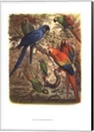 Tropical Birds III Fine-Art Print