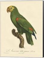 Parrot, PL 86 Fine-Art Print