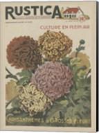 Plantez Des Chrysanthemes Fine-Art Print
