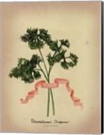 Herb Series II Fine-Art Print