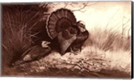 Wild Turkey Fine-Art Print