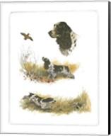 Cocker Spaniel Fine-Art Print