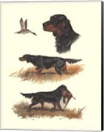 Gordon Setter Fine-Art Print
