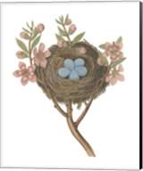 Antique Bird's Nest I Fine-Art Print