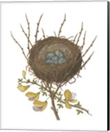 Antique Bird's Nest II Fine-Art Print