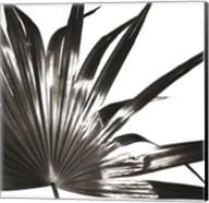 Black and White Palm I Giclee