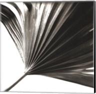 Black and White Palm II Giclee