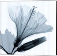 Hibiscus and Bud Fine-Art Print