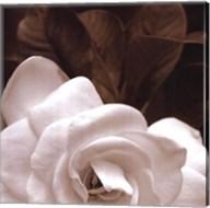 Gardenia Garden Fine-Art Print