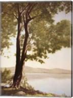 Sunlit Trees I Fine-Art Print