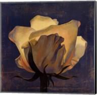 Glowing White Rose Fine-Art Print