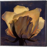 Glowing White Rose Fine-Art Print