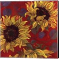 Sunflower II Fine-Art Print