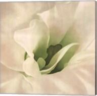 White Azalea Fine-Art Print